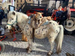 Carrozze, cavalli, cani e gatti hanno invaso la città