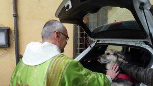 Benedizione degli animali in basilica