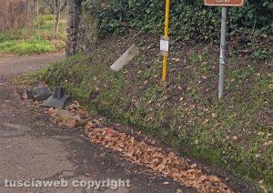 Viterbo - Volpe morta in strada Fagiano
