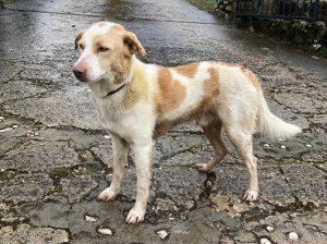 Bassano in Teverina - Trovato cane sulla sp Ortana