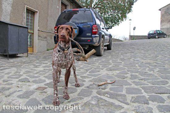 Roccalvecce - Il cane Zero