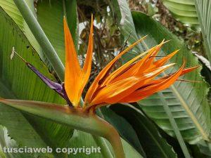 Fiore del pappagallo - Foto di Assunta Ricci