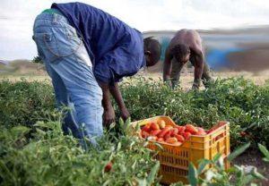 Braccianti agricoli - Foto di repertorio