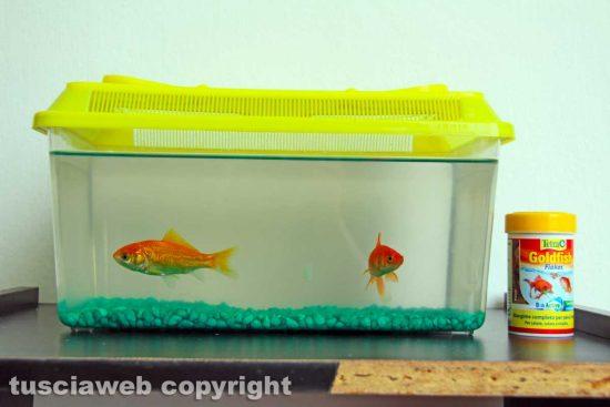 Viterbo - I pesci rossi