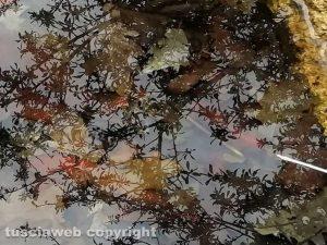 Riflessi nell'acqua