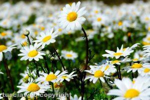 Viterbo - La primavera nelle campagne viterbesi