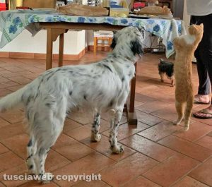 Un cane e un gatto in cerca di cibo