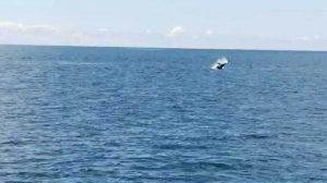 Delfini avvistati a Montalto