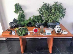 Orte - Piante di cannabis e centinaia di grammi di marijuana in casa - Il sequestro dei carabinieri
