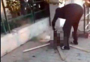 Livorno - Uccide gatto in strada