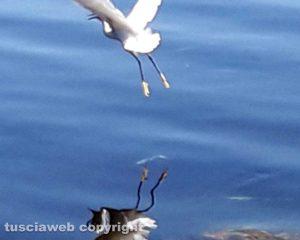 Immagine riflessa di airone sul lago...