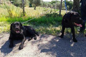 Montefiascone - I due cani trovati in via Otto marzo