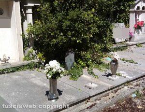 Viterbo - Erbacce tra le tombe al cimitero San Lazzaro
