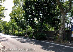 Viterbo - Viale Trieste invasa dalle erbacce