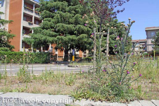 Viterbo - Erba alta dalle parti di via della Pila