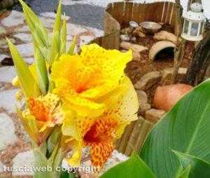 Strelitzia in fiore