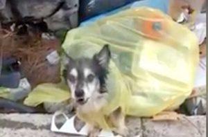 Roma - Cane trovato tra i rifiuti