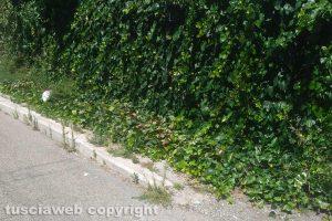 Viterbo - Incuria sui marciapiedi