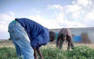 Braccianti agricoli - Immagine di repertorio