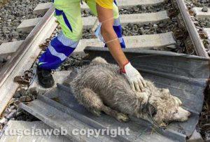 Maltempo - Tromba d'aria - I danni in zona Rinaldone - Il cane ritrovato in fin di vita e salvato