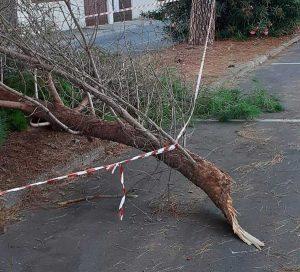 Montalto di Castro - Il ramo caduto