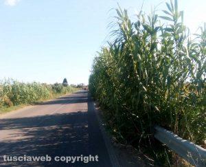 Tarquinia - Vegetazione invade le complanari