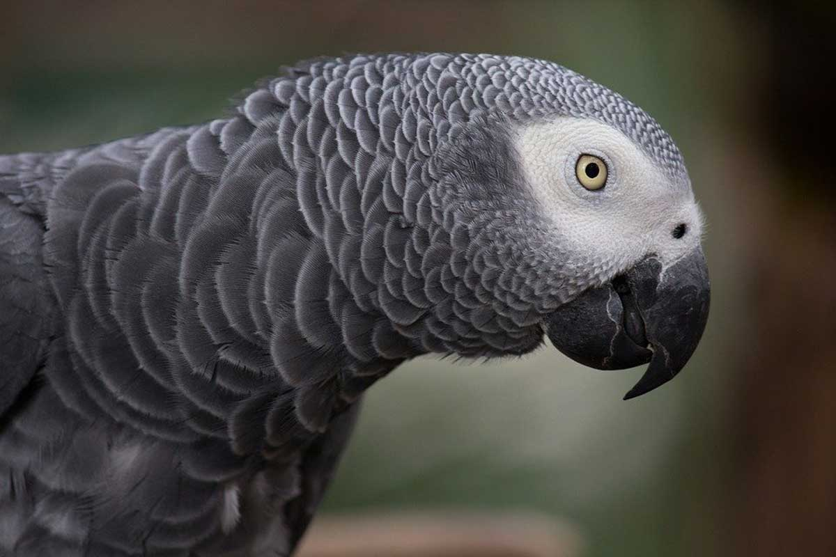 Cinque pappagalli cacciati da un parco perché dicono troppe parolacce
