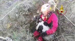Campobasso - Il salvataggio del cane