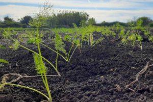 Tarquinia - Donate 1700 piantine da orto alla sezione di agraria dell'istituto Cardarelli