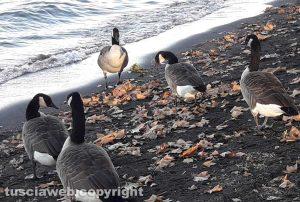L'autunno al lago delle oche canadesi di Assunta Ricci