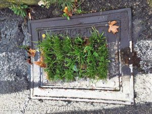 Viterbo - Tombino con erba