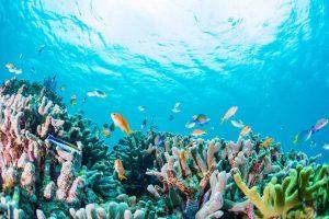 Australia, la grande barriera corallina