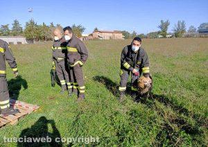 Viterbo - Il cane salvato dai vigili del fuoco