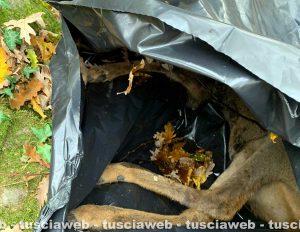L'immagine del cane abbandonato senza vita in una busta