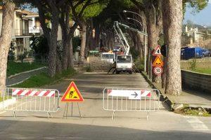 Montalto di Castro - La potatura degli alberi in viale dei Pini