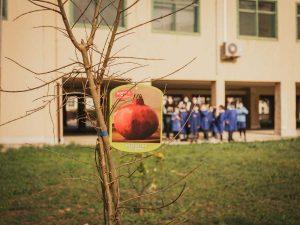 I melograni donati alle scuole da Biosalus
