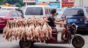 Cina, i mercati degli animali