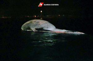Guardia costiera - La carcassa della balenottera nel porto di Sorrento