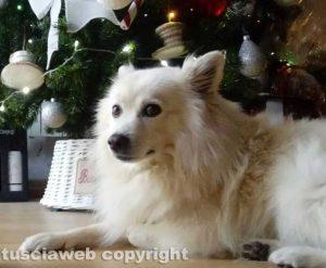 Viterbo - Whisky accanto all'albero di Natale
