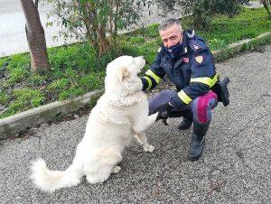 Terni - Il cane salvato dalla polizia stradale