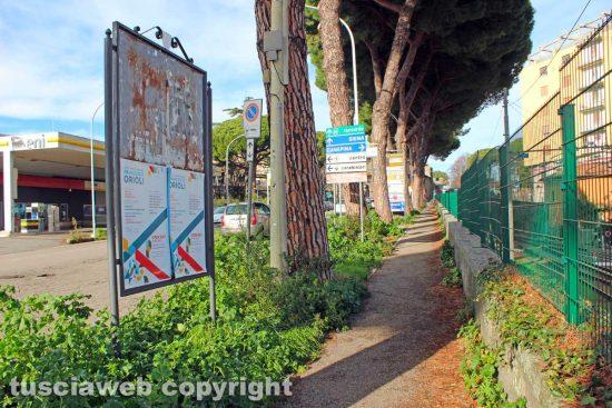 Viterbo - L'erba alta lungo il viale di Porta Romana