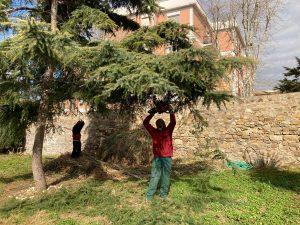 Civitavecchia - Giardino cittadella - Lavori di manutenzione del verde