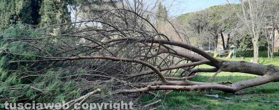 L'albero caduto nel parco della Quercia