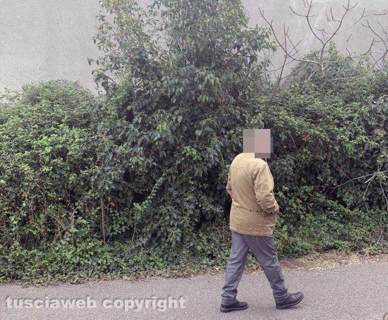 Viterbo - Via Mantova - Gli arbusti coprono il marciapiede