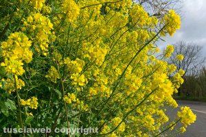 Cespuglio verde e giallo