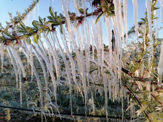 I danni provocati dal gelo