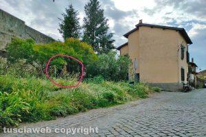 Viterbo - La statua di Padre Pio coperta dall'erba