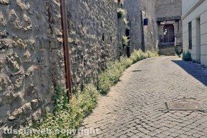 Viterbo - Incuria lungo la strada che porta alla casa di Santa Rosa
