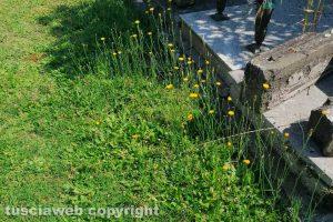 Viterbo - Incuria al cimitero di San Lazzaro